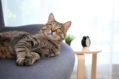 Cute cat resting on sofa. At home stock image