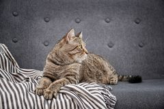 Cute cat resting on sofa royalty free stock photo