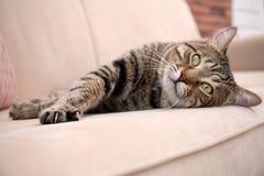 Cute cat resting on sofa stock photos