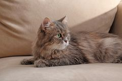 Cute cat resting on sofa at home stock photo