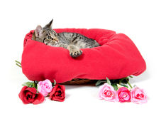 Cute cat and roses Stock Images