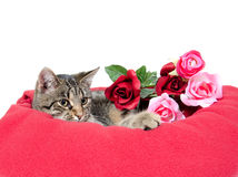 Cute cat and roses Stock Photos