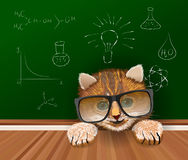 Cute cat scientist in black big glasses staying near the table  Royalty Free Stock Photos
