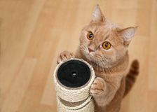 Cute cat by the scraper royalty free stock image