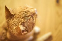 Cute cat seen from above. Head in focus, everything else blurred royalty free stock photo
