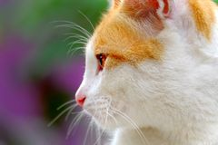 Cute cat seen from the side. With sharp eye, and ferocious aura, looking on something, maybe some  potential prey Royalty Free Stock Images