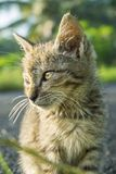 Cute cat with serious expression. And seem pay attention to something Royalty Free Stock Photos