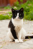 Cute Cat Sit On Road Summer. White And Black Cute Cat Pussycat Sit On Concrete Tile Road Outdoor Summer royalty free stock images