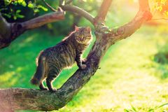 Cat sits on a branch of a tree. Cute cat sits on a branch of a tree in a garden Royalty Free Stock Images