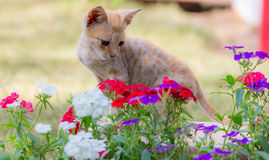 Cute cat. A cute cat sits in between flowers in a garden and looks at the pretty flowers. A little pet kitten stock photo