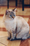 Cute cat sits in the middle of the room on the floor of the house stock images