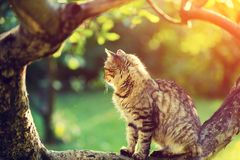 Cute Cat Sits On A Branch Of A Tree Stock Photos