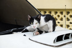 Cute cat sitting on a car and looking at you Royalty Free Stock Photo
