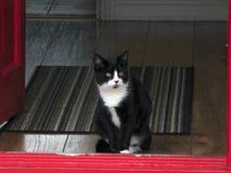 Cute Cat sitting in Doorway. Cute black and white cat sitting in red doorway Royalty Free Stock Photography