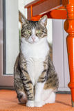 Cute cat sitting Royalty Free Stock Photography