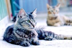 Cute cat sitting in floor casually. And its yellow beautiful eye looking at left. In the background, another cat also sitting down, watching cat in the front Stock Photos
