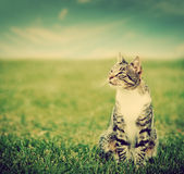 Cute cat sitting on green spring grass Royalty Free Stock Photo
