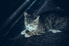 Cute cat sitting on ground Royalty Free Stock Photo