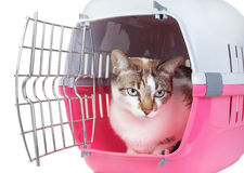 Cute cat sitting home watching from the cell. Royalty Free Stock Photo