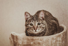 Cute cat sitting on the ottoman. Stock Photo