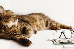 Cute cat sitting on table with glasses phone and  money, working Royalty Free Stock Image