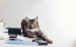 Cute cat sitting on table with work items, funny moment. cat freelancer with amazing looking eyes at home. space for text stock photos