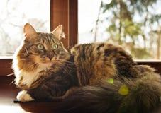 Cute cat sitting Stock Photos