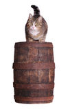 Cute cat sitting on wooden barrel Stock Photography