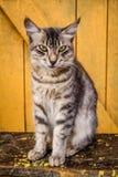 Cute cat Stock Photography
