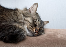 A cute cat sleeping Royalty Free Stock Photos
