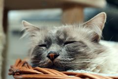 Cute cat sleeping in a basket Royalty Free Stock Photos