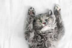 Cute cat sleeping on the bed Royalty Free Stock Image