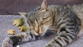 Cute cat sleeping on concrete Royalty Free Stock Photo
