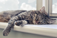 Cute cat sleeping. On the windowsill closeup Stock Photos