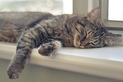 Cute cat sleeping. On the windowsill closeup Stock Photo