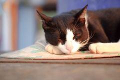 A cute cat sleeping on the floor, selective focus. Close up view of a cute cat sleeping on the floor, selective focus stock photos