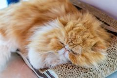 Cute cat is sleeping in his bed. A ginger cat sleeps in his soft cozy bed on a floor carpet, soft focus stock photo