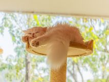 Cute cat is sleeping in his bed. A ginger cat sleeps in his soft cozy bed on a floor carpet, soft focus royalty free stock photography