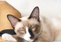 Cute cat sleeping photo. pet photo. Lazy cat photo stock images