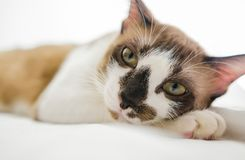 Cute cat is sleeping On a white background Soft-focus image. Cute cat is sleeping On a white background Soft-focus image High definition image stock image