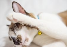 Cute cat is sleeping On a white background Soft-focus image. Cute cat is sleeping On a white background Soft-focus image High definition image stock images