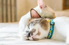 Cute cat is sleeping On a white background Soft-focus image. Cute cat is sleeping On a white background Soft-focus image High definition image royalty free stock image
