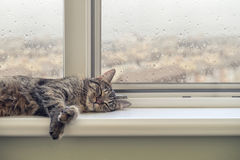 Cute cat sleeping. On the windowsill in a rainy day Stock Image