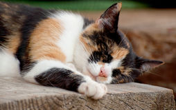 Cute cat sleeping Royalty Free Stock Photos
