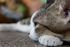 Cute cat sleeping royalty free stock photography