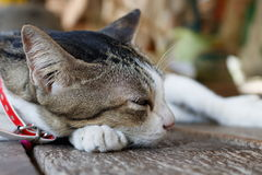 Cute cat sleeping royalty free stock photo