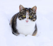 Cute cat in snow Royalty Free Stock Photos