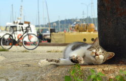 Cute cat sprawl Royalty Free Stock Images
