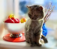 Cute Cat in the spring and blue glass vase plants a bouquet of willow at the top of the window animals enjoy the suns royalty free stock photo