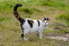 Cute cat standing on grass with its raised tail Stock Images